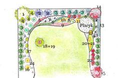 1 - modrzew istn. 2 - świerk serbski 3 - tuja 'Smaragd' 4 - hortensja 'Limelight' 5 - strzyżony berberys Admiration 6 - bukszpan - żywopłocik formowany 7 - miskant 'Variegatus' 8 - turzyca 'Praire Fire' 9 - żurawka 'Berry Smoothie' 10 - żurawka 'Electra' 11 - kula żółty bukszpan lub zielony 12 - miskant Gracillimus 13 - ekran z cisa lub inny strzyzony żywopłot 14 - ambrowiec na pniu lub inne drzewo 15 - śliwa wiśniowa 'Nigra' 16 - trzmielina 'Emereld'n Gold' na pniu 1,20 17 - tawuła japońska…
