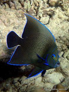 Snorkeling Report Anse Soleil | Mahe Island | Seychelles
