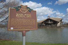 Magee Marsh is a birding paradise - Toledo Blade