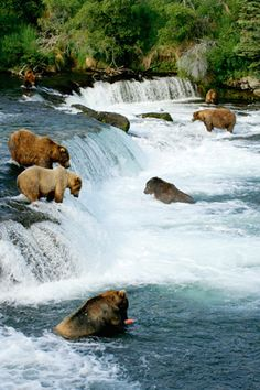 Katmai National Park and Preserve--King Salmon, Alaska. my dream is to see a wild grizzly Santa Cruz Bolivia, Places To See, Places To Travel, Katmai National Park, Alaska National Parks, Alaska Travel, Alaska Trip, Visit Alaska, Fauna