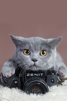 Aaww... kitty with a camera!! Say cheese burger... well mouse burger actually!