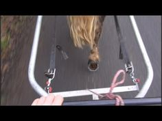 How to desensitise a carriage driving horse to unusual or loud noise | Training method for horses - YouTube