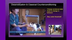 Dog Aggression: From Fearful, Reactive & Hyperactive to Focused, Happy & Calm + Learn to Earn  You may know many techniques for training your reactive or aggressive dog, but do you have a cohesive plan? Many people approach the situation narrowly by focusing only on the problem they see when many other factors contribute to their dog's behavior and may affect his progress. This presentation provides an overview of how to recognize early signs of fear, why it can lead to aggression, and…