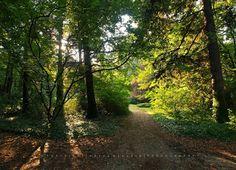 Pölcz Klaudia - kisklau: Botanikus kertben egy napos őszi napon