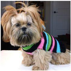 Free Crochet Dog Sweater Pattern @jo Hunter Gaddis