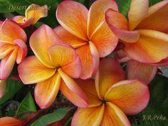 Joe peña Tropical Plants, Tropical Gardens, Beautiful Flowers, Peach, Fruit, Peaches