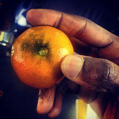 #handpicked off #tree in the #city ! #urbanwarrior #urbanforaging it has #seeds ! UrbanWarriors avoid #seedlessfruits - Seeds = Life  by WILLPOWER STUDIOS   WILLIAM ISMAEL   www.WillpowerStudios.com