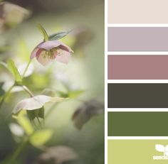 design seeds paint - Google Search