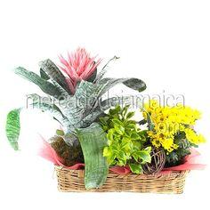 Bromelia en Canasta| Envia Flores
