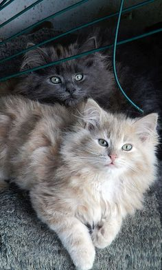 """We quickly discovered 2 kittens were much more fun than one."" --Alan Lacy"