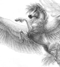 Beautiful Pegasus drawing, so much detail