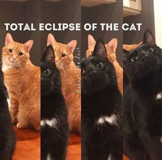 Total eclipse of the cat ha ha ha #FunnyCatPhotos