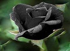 Prentresultaat vir pinterest rose quilting