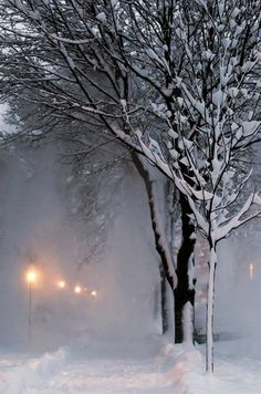 heavy snow falls from the trees to make a white out.