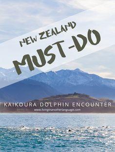Swim with Dolphins in Kaikoura, New Zealand #nzmustdo #newzealand