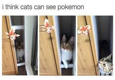 18 Cat Memes To Fill Your Wednesday With Joy | CutesyPooh
