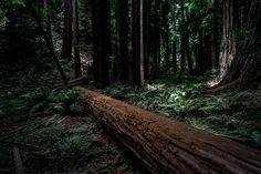 Muir Woods, CA via demandingart.com