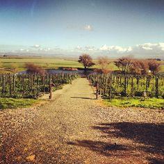 Ram's Gate Winery #Sonoma #travel #winecountry #vineyard