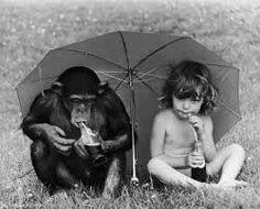A gyerek élénksárga nyári ruhája kiemelte nyúlánk alakját. A nyelvét is kidugva igyekezett megértetni magát a majommal. Jó, ha volt tíz éves, de a kézfeje táncot járt, ahogy a jelnyelvet hadarta Sandynek. Ő a lányra meresztette gombszemeit, minden íze a gyereket figyelte. Amikor a kislány elhallgatott, hasonló ütemben jelet vissza neki.