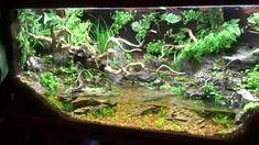 Paludarium The Secret Garden SZ Update maxresdefault The Secret Garden, Reptile Terrarium, Glass Terrarium, Terrarium Ideas, Horned Lizard, Cool Fish Tanks, Nano Tank, Plant Projects, Vivarium