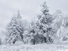 A Frozen Christmas * Um Natal Gelado