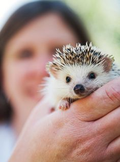 Rosie the hedgehog | use real butter