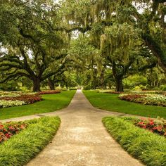 The Live Oak Allée - Brookgreen Gardens in between Charleston and Myrtle Beach SC