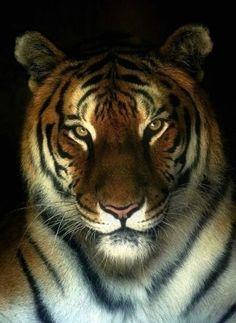 Tigre en la noche