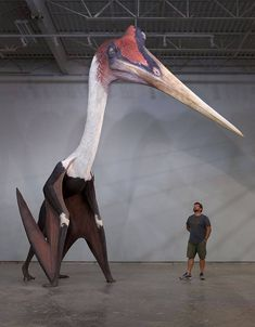 Largest known flying dinosaur <<< dumbass. With a head that big and wings that small it's just a giraffe-lizard with chicken wings. The can not fly. It IS however the largest Pterasoar. Dinosaur Fossils, Dinosaur Art, Dinosaur Pics, Dinosaur Funny, Extinct Animals, Extinct Birds, Art Sculpture, Prehistoric Creatures, Prehistoric Dinosaurs