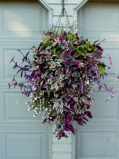 The right combination can take a hanging basket over the top. A step by step guide on constructing and planting your very own beautiful and elegant hanging baskets this summer.