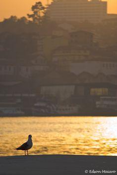 aqui até as gaivotas curtem o pôr do sol