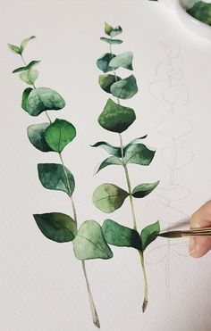 I painted dry flower eucalyptus . Watercolor Leaves, Easy Watercolor, Watercolour Tutorials, Watercolor Techniques, Watercolour Painting, Art Techniques, Painting & Drawing, Painting Inspiration, Art Inspo
