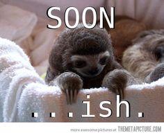 Slow baby sloth.