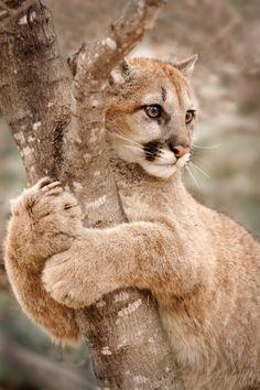 Untitled — beautiful-wildlife:   Hold OnbyLaurie Hernandez
