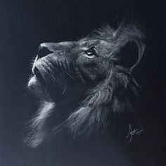 Lion (inverse drawing), Samuel Lee on ArtStation at https://www.artstation.com/artwork/lion-inverse-drawing