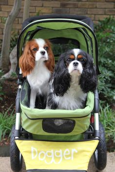 Look at this gorgeous pair Pascha and Izzy, enjoying their Dogger. It's a beautiful sight! :)