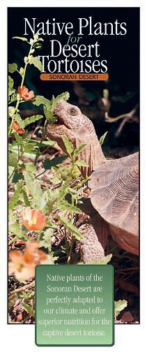 Desert tortoise food list (click the link in the first paragraph of the article for a complete list)