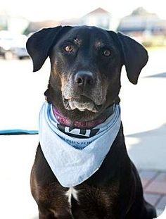 Frederick, MD - Coonhound (Unknown Type)/German Shepherd Dog Mix. Meet Jazz, a dog for adoption. http://www.adoptapet.com/pet/16054887-frederick-maryland-coonhound-unknown-type-mix
