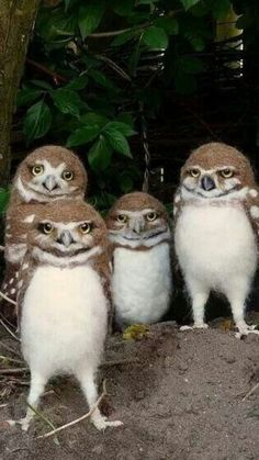 These owls look like they're about to drop the hottest album of 2017