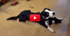 This Puppy Loves His Toy So Much He Wants Everyone To Know It! Watch His Adorable Serenade! | The Animal Rescue Site Blog