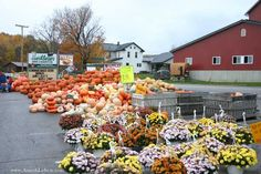Hershbergers-Farm-Bakery is a wonderful family place . . . Bakery, fresh produce, pony rides, Amish buggy rides, petting farm, kettle corn, flowers, and more.  Located on SR557 about 1 mile south of SR39 outside of Berlin