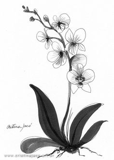 Orchid Black and white original art minimalist by cristinajaco, $25.00