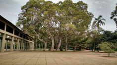 Ibirapuera Take A Break, Great Places, Sidewalk, Side Walkway, Walkway, Walkways, Pavement