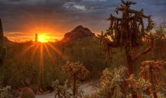 Visit the Desert Botanical Garden for up close and personal encounters with flora, fauna (butterflies!), events (Spring Concert Series!), exhibits, education and unforgettable sunsets