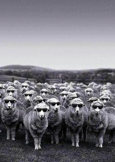 Sheep-like fashion