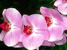 Wallpapers Tagged With Orchid Page Beautiful Rare Orchid Blue