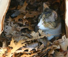 Baby in autumn 021a by Sue B6, via Flickr