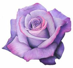 Colorpencil Colored Pencil Artwork, Color Pencil Art, Acrylic Painting Canvas, Fabric Painting, Rose Reference, Blue Rose Tattoos, Beautiful Flowers Wallpapers, Colored Pencil Techniques, Beautiful Sketches