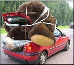 big teddy bear squashed in car - Funny Dirty Adult Jokes, Memes . Big Teddy Bear, Giant Teddy, Big Bear, Funny Memes, Jokes, Videos Funny, Funny Quotes, Boyfriend Pictures, Enough Is Enough