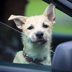 Travel Tips for Your Dog - Animal Hospital of Waynesville - Waynesville NC Car Smell, Dog Smells, Dog Travel, Travel Tips, Pet News, Pet Care Tips, Pet Safe, Your Pet, Dog Cat